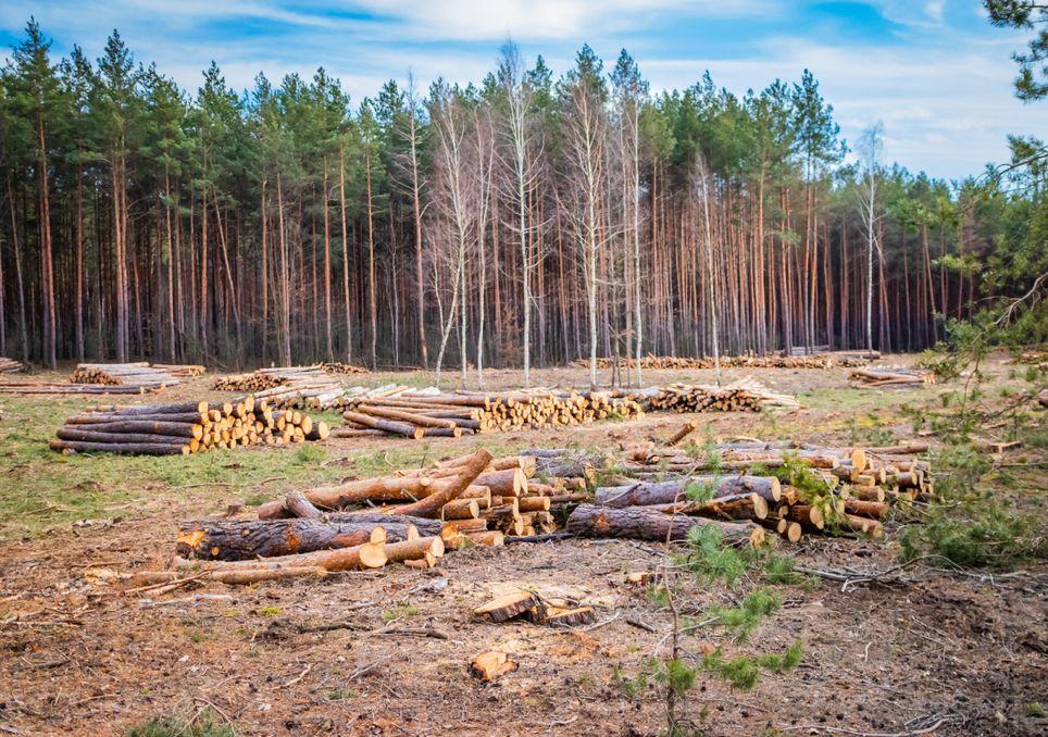 Os hábitos dos ocidentais levam à perda de quatro árvores por ano