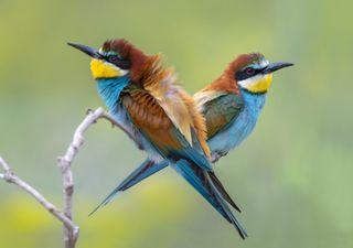 Os pássaros estão a migrar para Norte: saiba aqui porquê!
