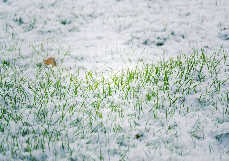 Neve relva culturas agrícolas arrasadas geadas tardias Europa Central