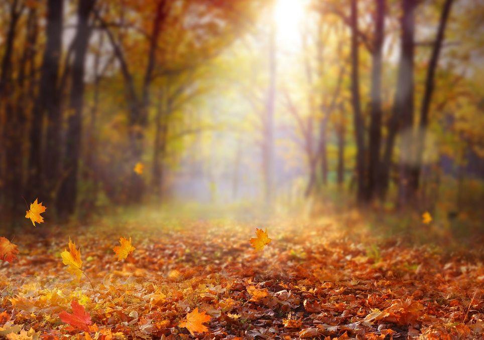 Camino con hojas secas cercado por árboles coloridos por el otoño