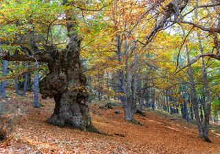 """Cambian de color y caen las hojas: """"otoño en Castilla, es maravilla"""""""