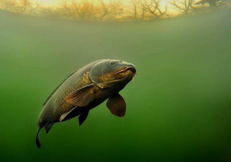 Rio con pez