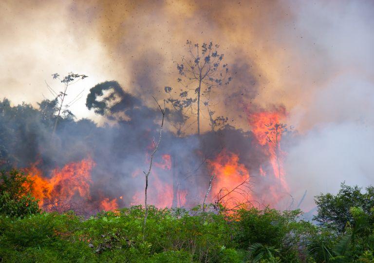 Queimadas Pantanal e Amazônia
