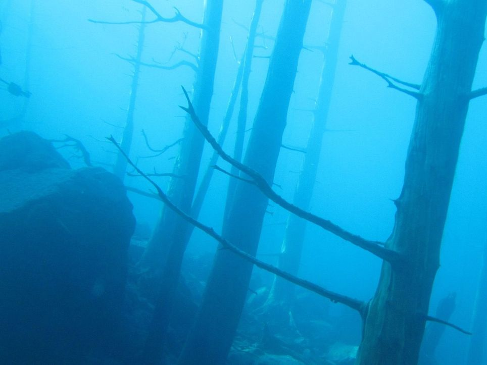 Bosque sumergido Villa Lago Traful tsunami olas
