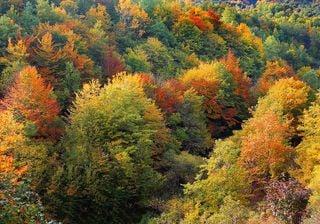 Perché le foglie degli alberi cambiano colore in autunno?