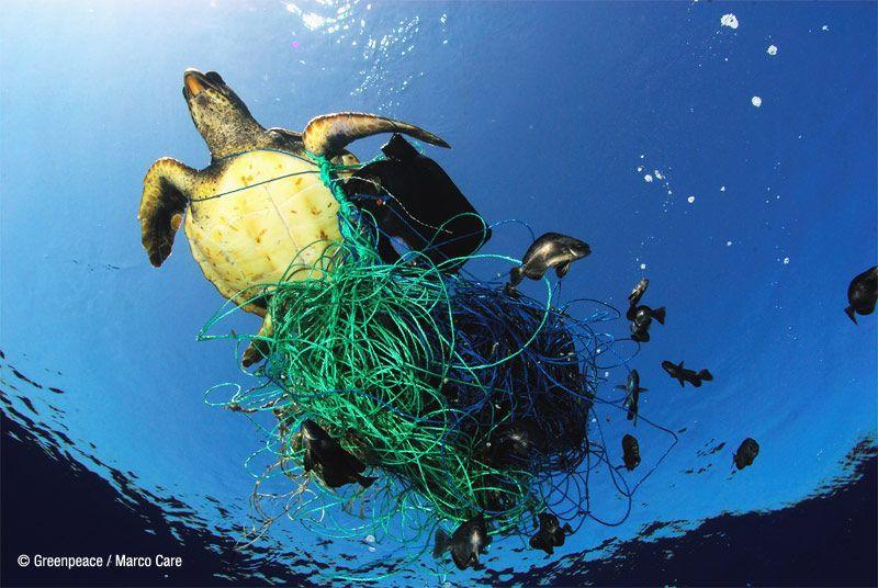 Este día sirve para concienciar a la opinión pública sobre las consecuencias que la actividad humana tiene para los océanos y sus especies marinas.