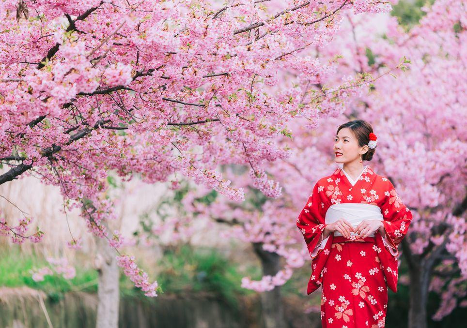 Porque as cerejeiras estão a florescer antes do normal no Japão?