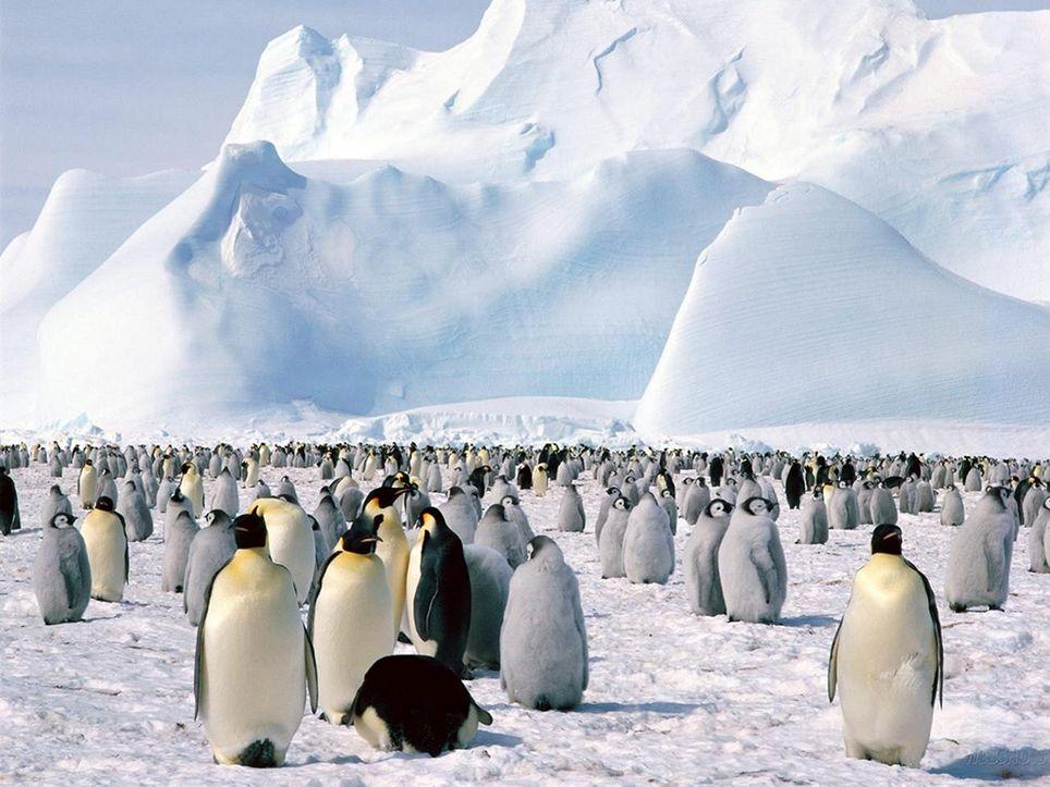 Las poblaciones de pingüinos en la Antártida también sufren el cambio climático
