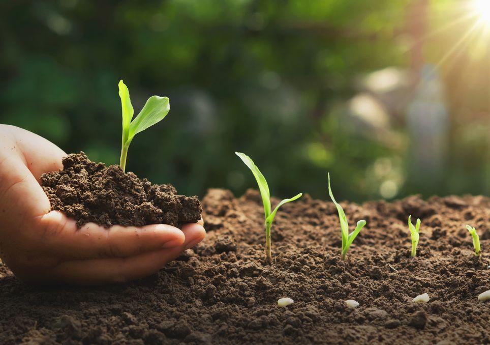 fenologia, estaciones, cambio climatico, germinacion, cultivos,