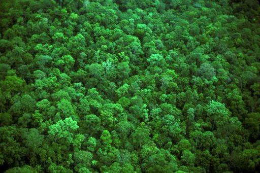Portal de vigilancia de bosques para luchar contra el cambio climático