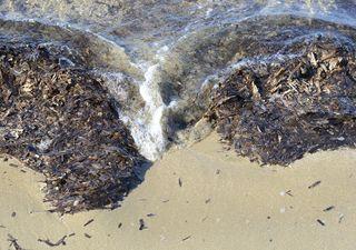 Ti dà fastidio la posidonia in spiaggia? Ecco quanto è importante