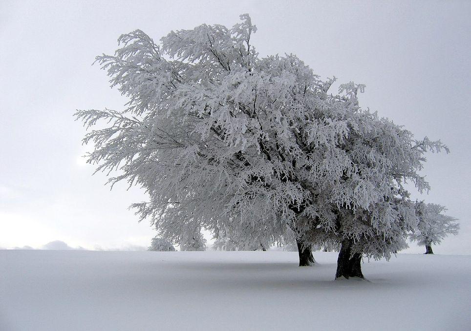 Enero, estadísticamente el mes más frío en México