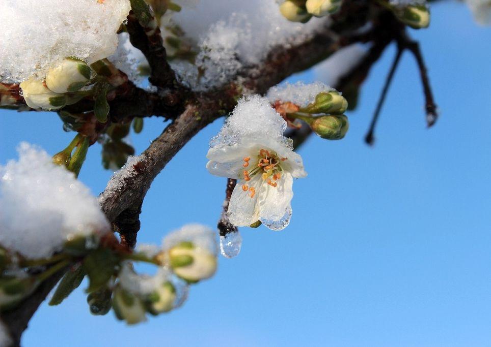 neve-fiori