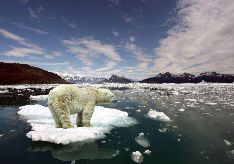 urso polar; degelo; alterações climáticas.