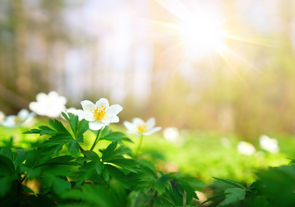 primavera flores