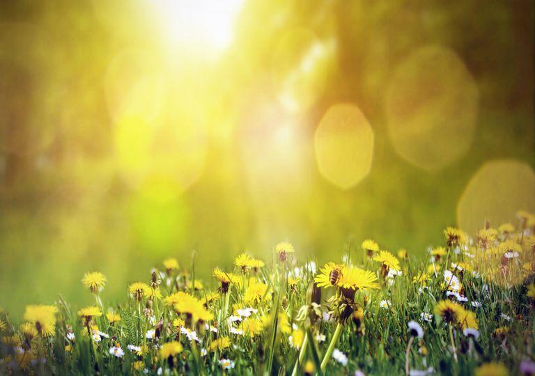 Flores; abelhas; primavera; luz solar