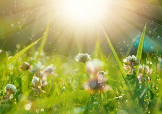 Primavera climatológica: que tempo fará em março, abril e maio?