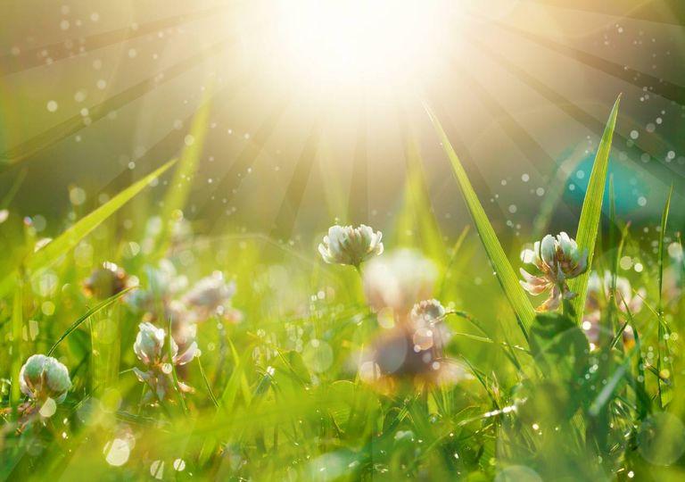 Campo de flores com gotas de chuva e luz solar