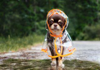 Schlimme Wetterprognose: Wird der Sommer nass und kühl?