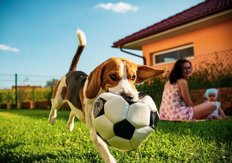Perro jugando con una pelota; momento en familia