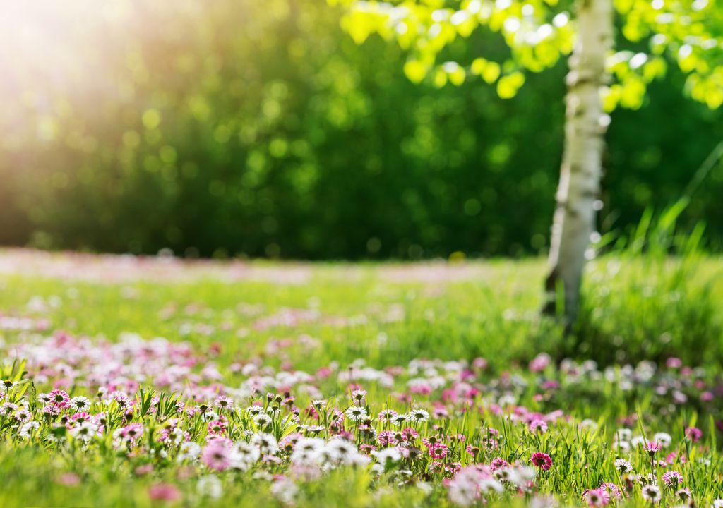 Primavera fin de semana tiempo clima