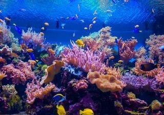 Protetor solar põe em risco os recifes de coral nas Caraíbas Mexicanas