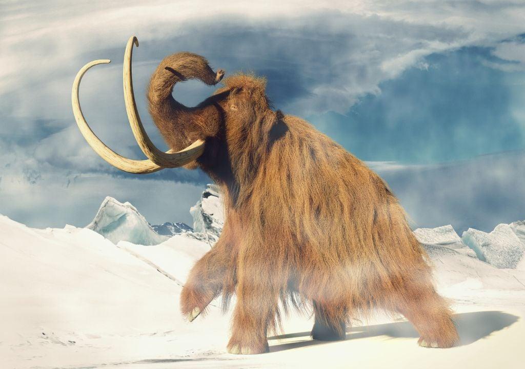 La dernière période glaciaire a atteint son apogée de glaciation il y a environ 20 000 ans et est la plus connue des glaciations anthropologiques.