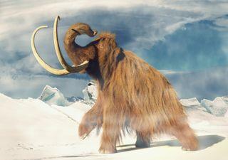 ¿Qué tan fría fue la Edad de Hielo? Científicos acaban de descubrirlo