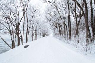 Qué es la nieve: tipos y predicción