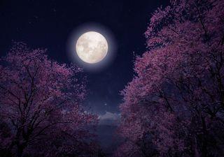 Astronomía en abril: lluvia de estrellas Líridas y la superluna rosa