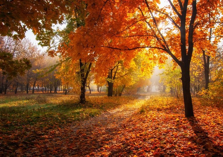 Autumn sun.