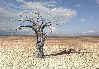 Réchauffement climatique : les régions tropicales bientôt inhabitables