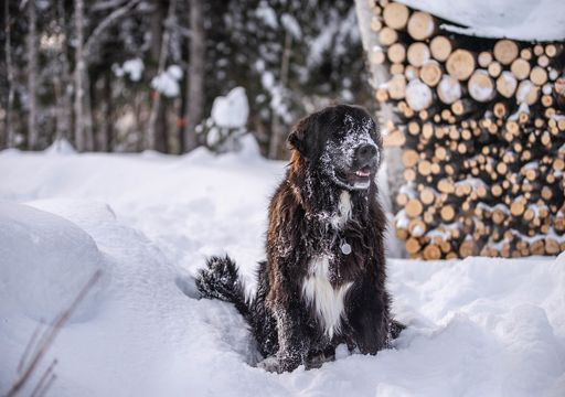 Record snowfall in Newfoundland, Canada