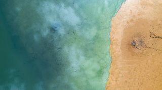 Reducción del mercurio en sedimentos marinos