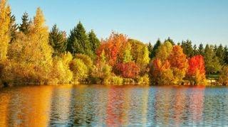 Refranes del otoño