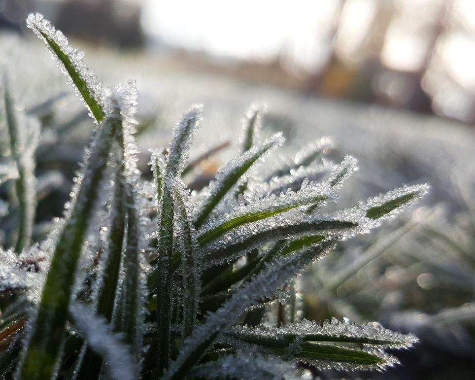 retour des gelées ce week-end