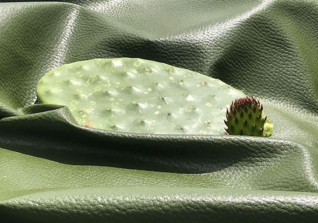 cactus piel cuero ecológico