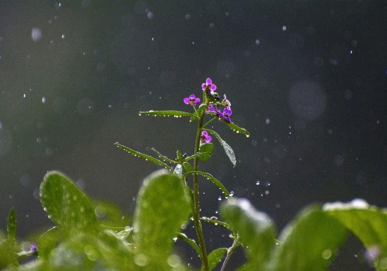 Endlich Sommerregen