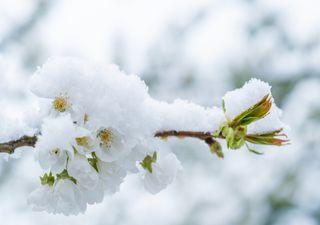 Schnee und Frost: Kommt jetzt der Winter zurück?
