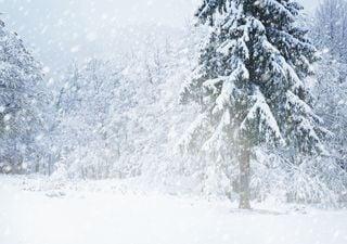 Morgen Schneesturm im Osten, Donnerstag schwere Sturmböen!