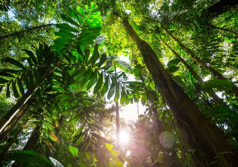 There are more than 15 000 trees in the Amazon
