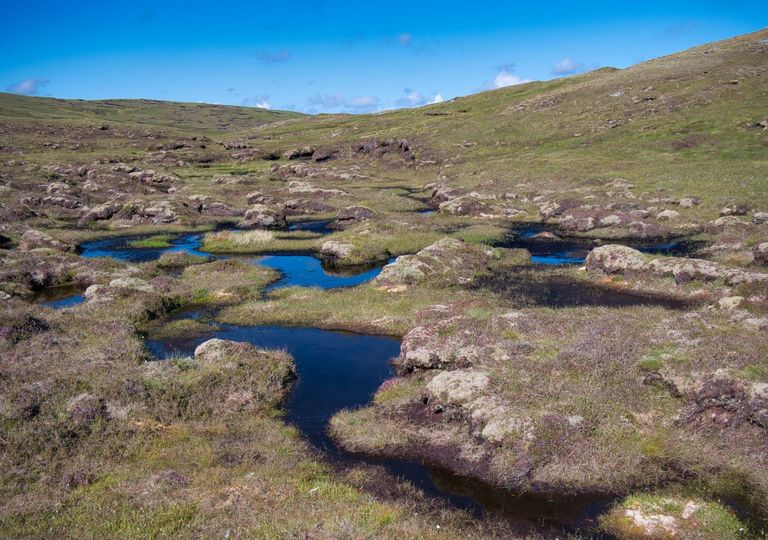 A wetland area forming peat in Shetland, Scotland