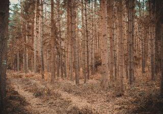 Dürre und Hitze: Französische Wälder sterben!