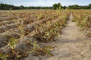 Sécheresse : l'inquiétude des agriculteurs à l'approche de l'été