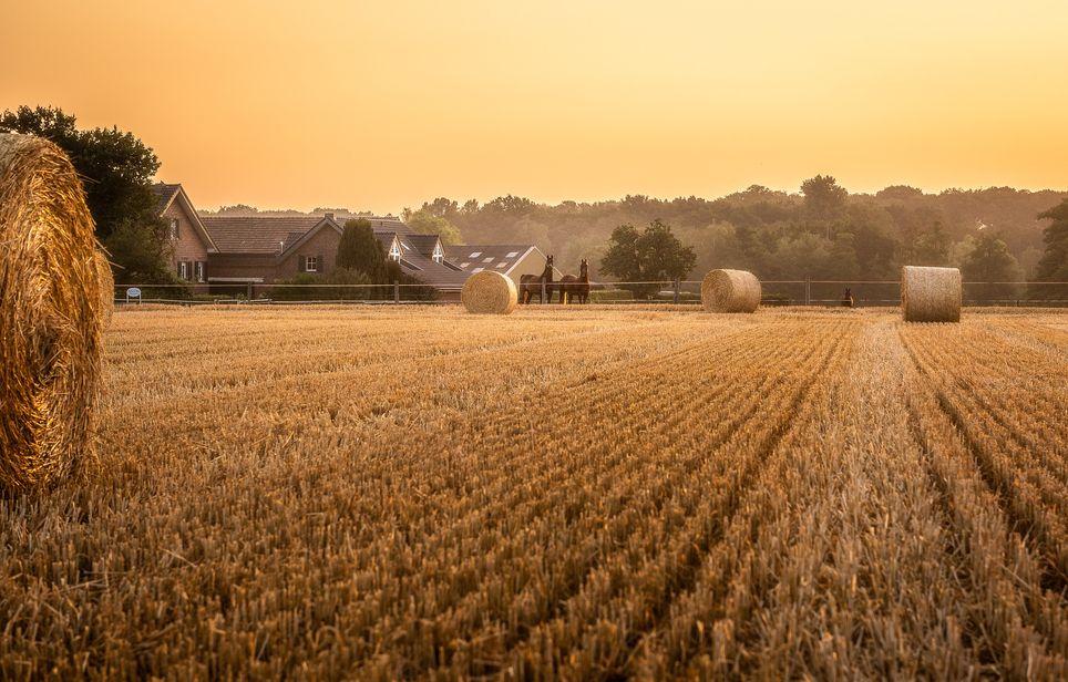 Les agriculteurs, déjà touchés par la sécheresse l'année dernière, craignent une nouvelle année difficile.