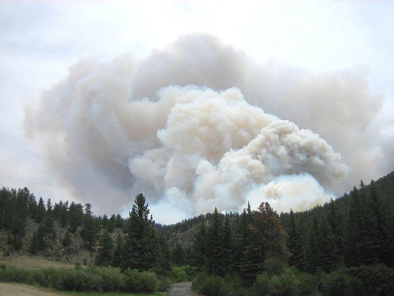 feux de forêts