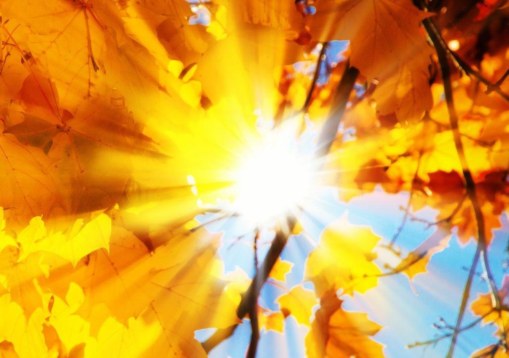 Sol entre hojas otoñales