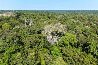 Sequías amazónicas autoinducidas