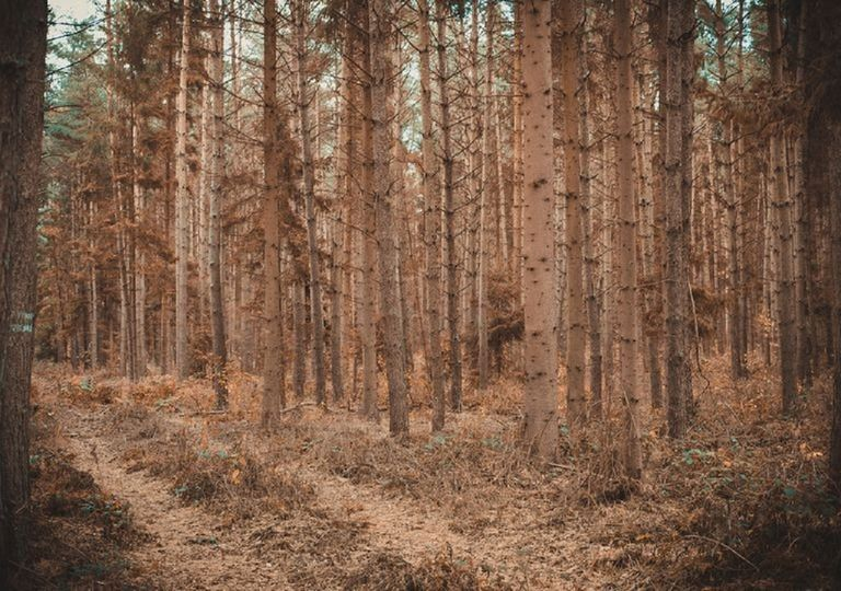 foreste-francia