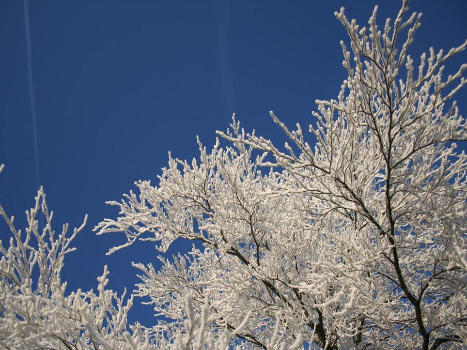 Frío Invierno Heladas Temperatura